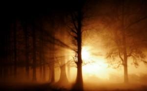 Nebel im Wald 02