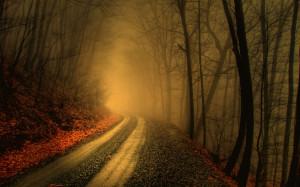 Nebel im Wald 03