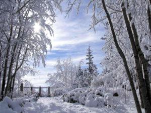 Winter Schnee 04