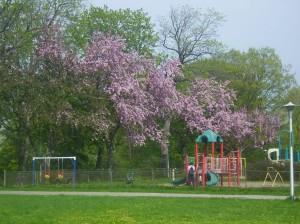 Frühling003