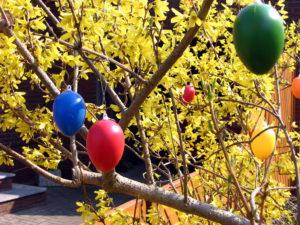 Ostern - Eier an Fotsythie