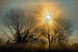 Nebel mit Sonne