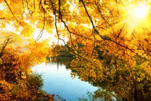 Die goldene Sonne des Herbstes strahlt durch die Bäume an einem Flussufer