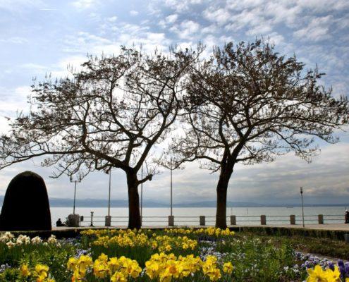 Eine frühlingshafte Landschaft ist am Mittwoch (04.04.2012) in Friedrichshafen am Bodenseeufer zu sehen. Das Wetter soll sich bis zum Beginn des Osterwochenendes verschlechtern und der Himmel sich weiter zuziehen. Ab Samstag soll es im Südwesten örtlich sogar zu Schneefällen kommen. Foto: Tobias Kleinschmidt dpa/lsw +++(c) dpa - Bildfunk+++